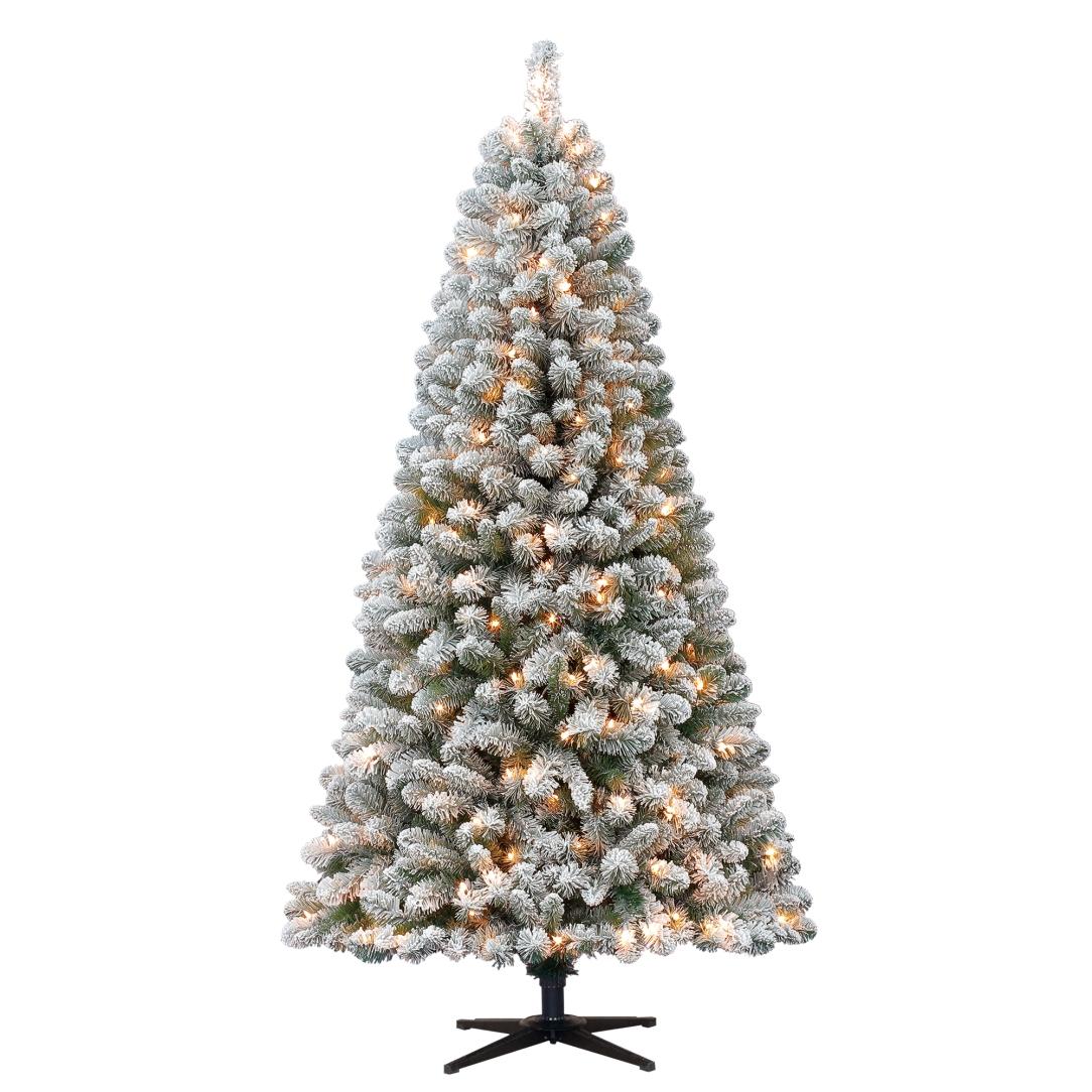 Live Christmas Trees At Walmart